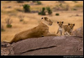 MOM and CUBS by dogansoysal