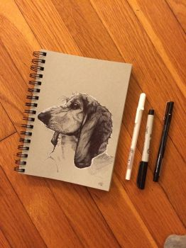 Willow the Bassethound by katbrarian