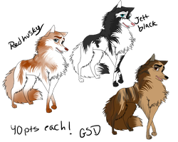 balto jenna wolf/husky points adopts by AgentWhiteHawk