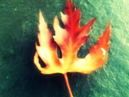 Leaf On Fire by ninaloo1