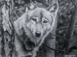 Wolf by tacsitimea