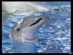 Sea World 14 by SPFan2