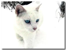 Snow Cat by palespiral