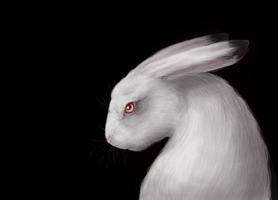 Hare by nerrrybe