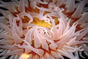 Sea Anenome by AndersonPhotography