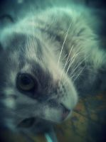 My cat give me pose by SottoPK