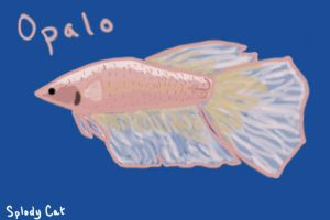 Betta Fish: Opalo by myexplodingcat