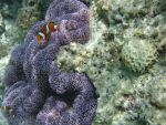 a little nemo fish by ericachan