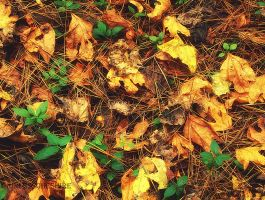 Day 296 - Colors of Autumn by PixiePoxPhotography