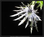 Thistle by LinMadAngel
