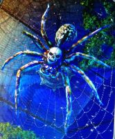 Skull spider by isaac77598