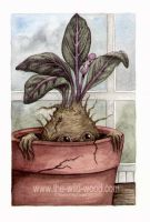 Mandrake by WildWoodArtsCo