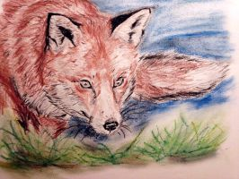 Red Fox by CpointSpoint