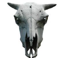 animal skull png cut out by subliminal2012