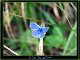 Blue Freedom by Dehearted