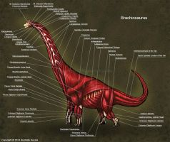 Brachiosaurus Muscle Study by TheDragonofDoom