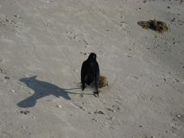 Beach and Birds 10 by Party-Hat-Cat