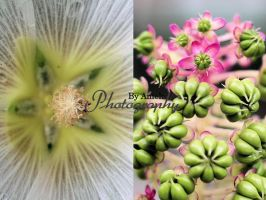 Nature's Beauty by AniekPhotography