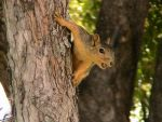 Squirrel 1, youz want me? by Christianonfire7