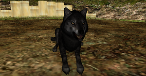realistic wolf + DL by Valforwing