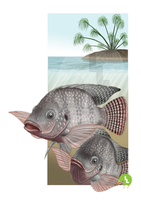 Nile Tilapia by SurrealisticPillow88