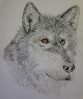Gray Wolf by Cuthillius