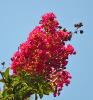 Blooms Against the Sky by Tailgun2009