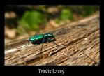 Green reflection beetle by RavenseyeTravisLacey