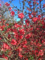 Red flowers by Kalosys-stock