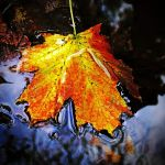 Autumn Lade 1 by Coigach