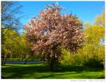 Floralescent Full Bloom by raize