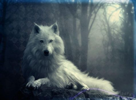 Wolf+texture by HumanLykos