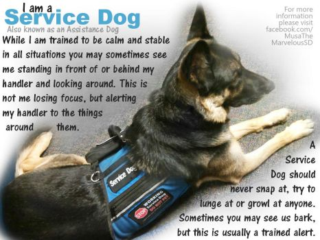 Service Dog Educational Poster by bunnybasement