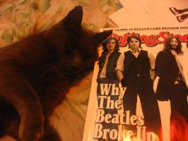 My Kitty Loves Teh Beatles by electricsorbet