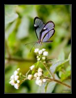 Butterfly by ricardsan