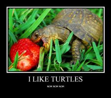 I like turtles by Arya7
