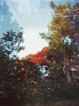 orchard by pistolwhipped