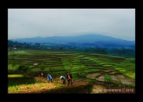 Ricefield of Ciseureuh.. by adjieguswara-art