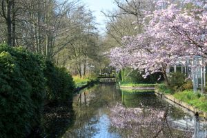 Keukenhof 1 by Angie-Pictures