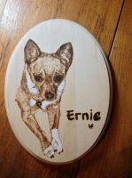 Ernie the Chihuahua by H20dog