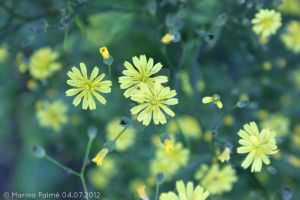 In the depths of green. by MarinaPalme