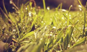 Morning dew by Iulia-Oprinesc