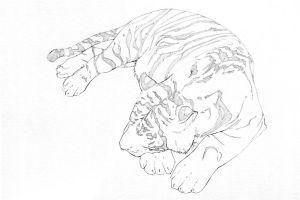 Napping Tiger - Uncoloured by QuiltedPanda