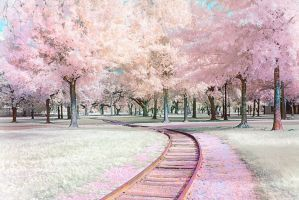 Floral Tracks by helios-spada