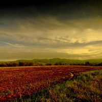 Evening Fields by DavidCraigEllis