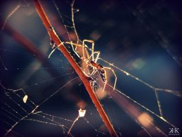 Spider by gold-rose