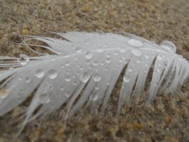Feather. by TADPhotography