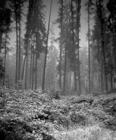 Rests the Forest by sternenfern