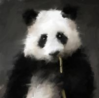 i love panda by ales-kotnik