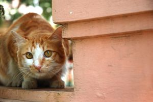 Crouching Kitty 10014347 by StockProject1